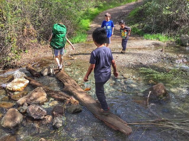 Hiking Mt. Diablo Falls Trail Loop water crossing