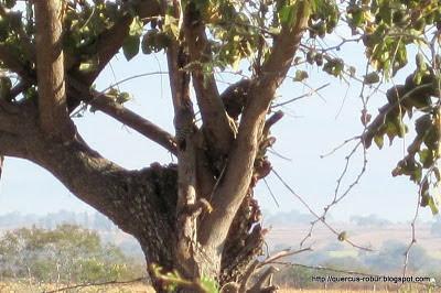 Pájaro carpintero - En el centro, en el tronco casi vertical.
