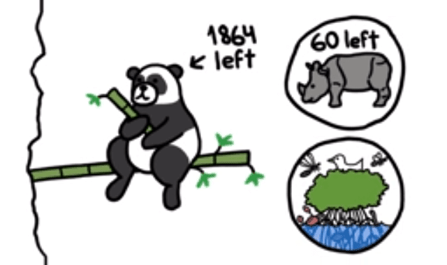 Should We Let Pandas Go Extinct?