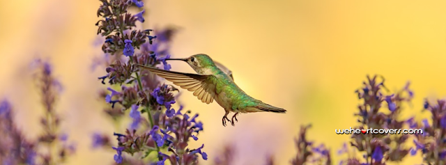 Beautiful Hummingbird Facebook Covers - Weheartcovers.com