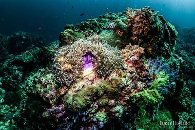 Koh-Haa-Koh-Lanta-Thailande-diving