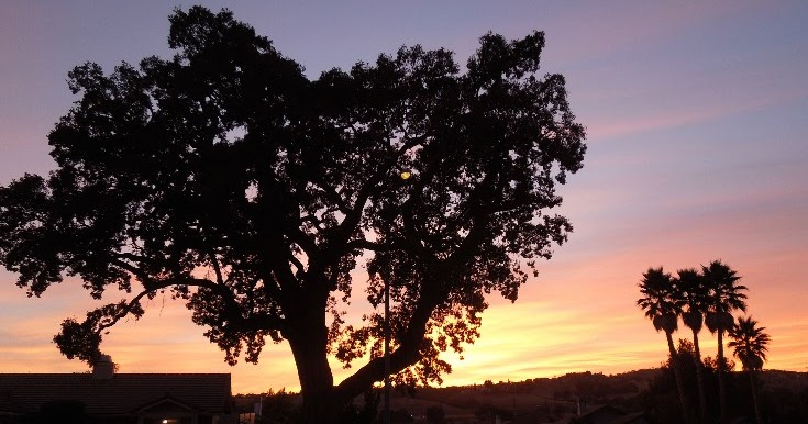 paso robles in photos  i do love trees