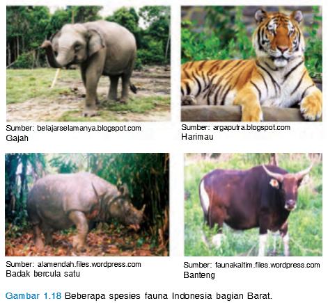 780 Gambar Hewan Peralihan Di Indonesia HD Terbaru
