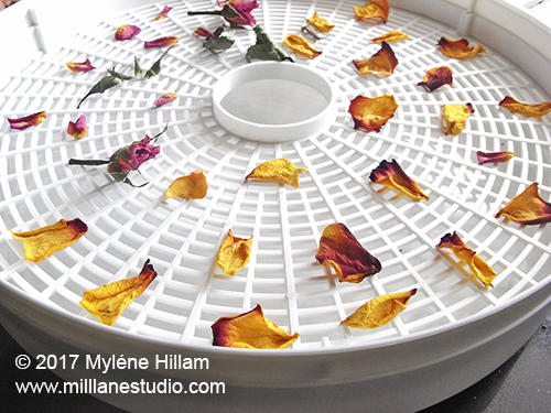 Deyhydrators work well for drying petals but they are better suited to making potpourri than for embedding in resin.