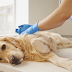 Mercy Killing of Dogs: Right or Wrong?