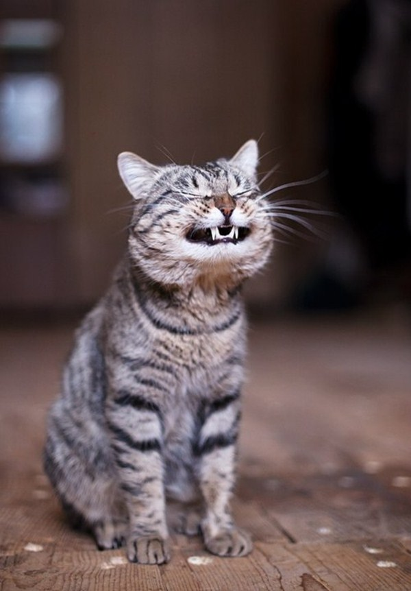funny cats cat cute meme pic silly kitty kittens crazy cheese lol kitties memes source random ever