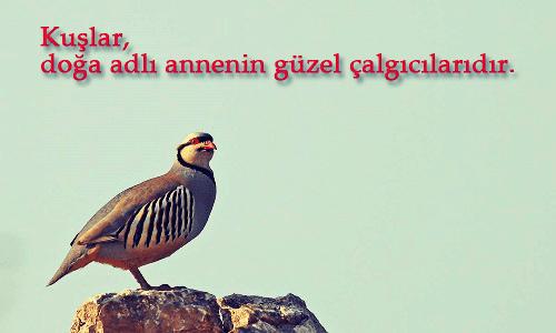 Kuşlar İle İlgili Sözler