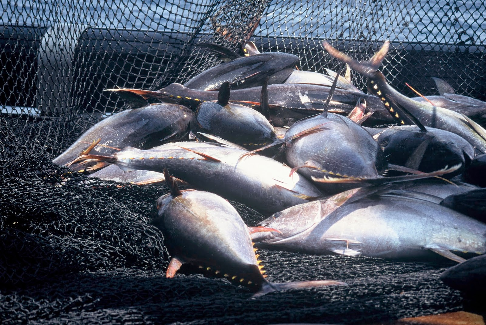 Fish exports jump by 20% in first quarter 2014