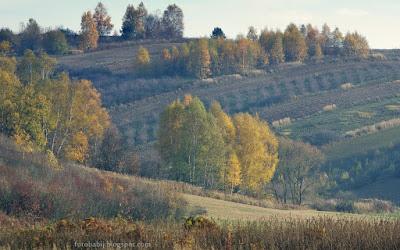 http://fotobabij.blogspot.com/2015/11/jesienny-krajobraz-z-brzozami.html