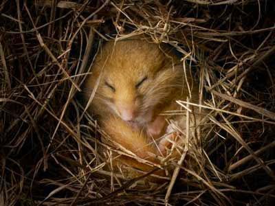 https://bio-orbis.blogspot.com.br/2014/05/sera-que-humanos-podem-hibernar.html