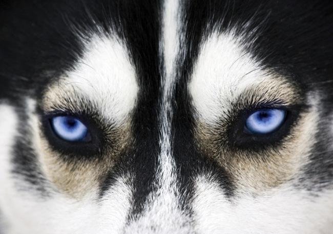Najczęstsze choroby oczu u psów