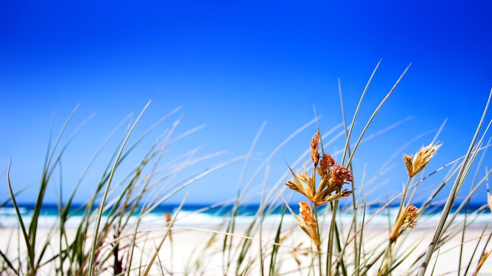 Nature Beach 3