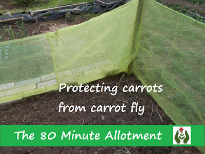 Protecting carrots from carrot fly The 80 Minute Allotment Green Fingered Blog