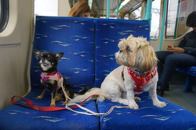 indigo and mouse, transport for london pets, pet blogger, essex blogger