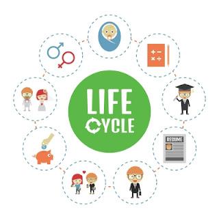 ciclo-da-vida