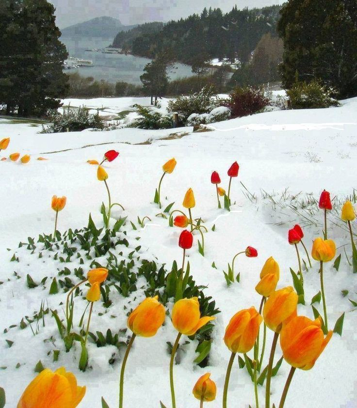 Five Places to See Snowfall in this Winter | Winter in Bariloche - Argentina