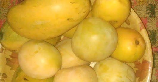 The Aam fruit ... Never 'aam', Ever Special!