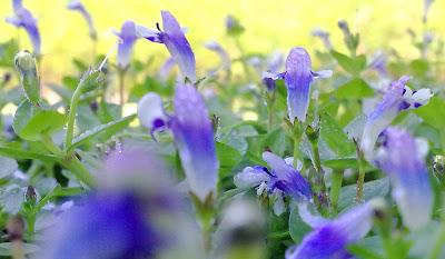 gambar bunga rumput relaks minda