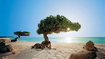 El paraiso en Aruba