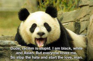 "A picture of a panda saying, ""Dude, racism is stupid.  I am black, white, and Asian.  But everyone loves me.  So stop the hate and start the love man."