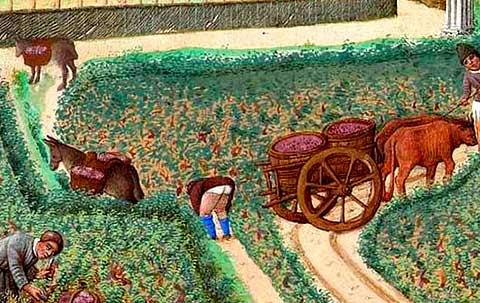 pertanian di eropah