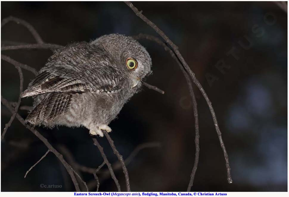 Christian Artuso: Birds, Wildlife - photo#12