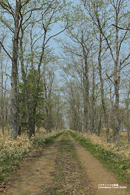ソウサンベツの林道 ≪Sosanbetsu Forest Road≫