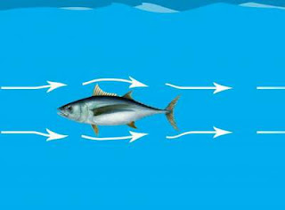 Hubungan arus dengan aktifitas ikan