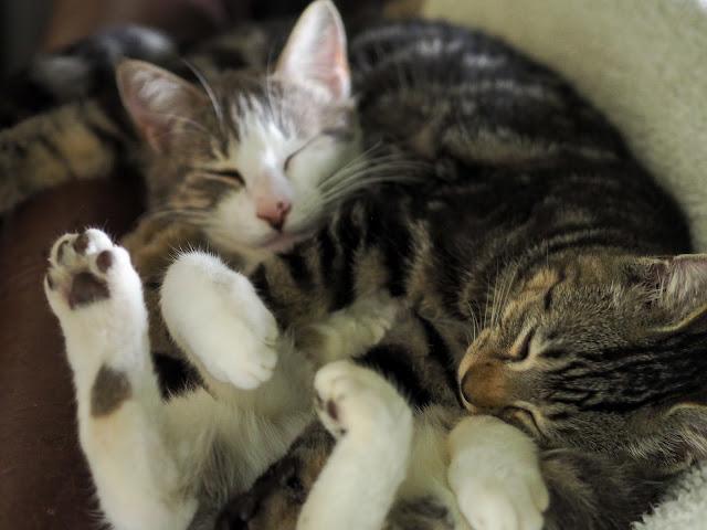 Kattenslaapje