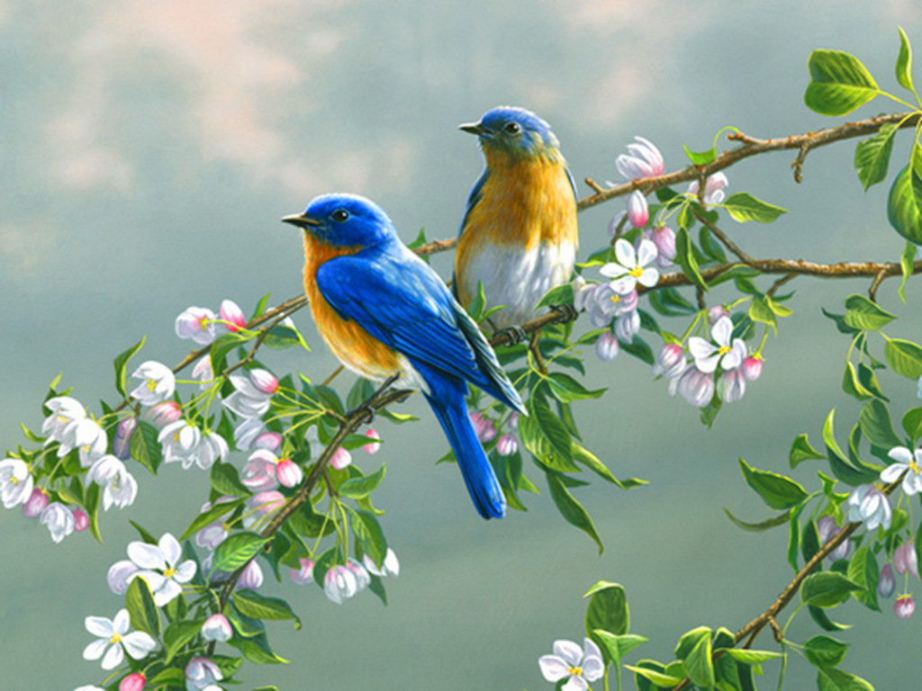 spring bird on a - photo #1