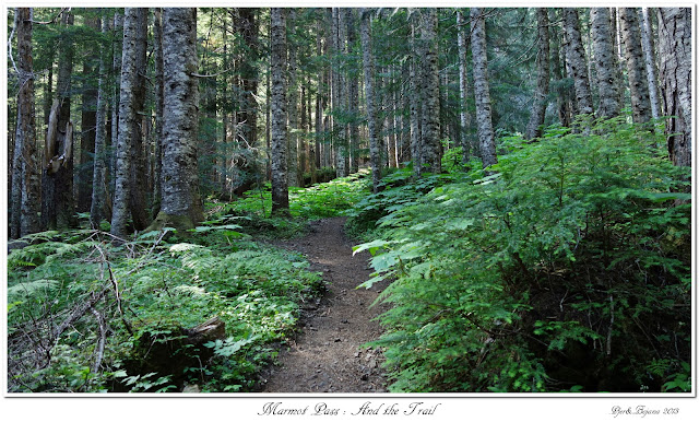 Marmot Pass: And the Trail