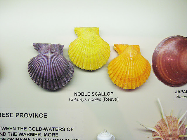 Shells from Japan, detail