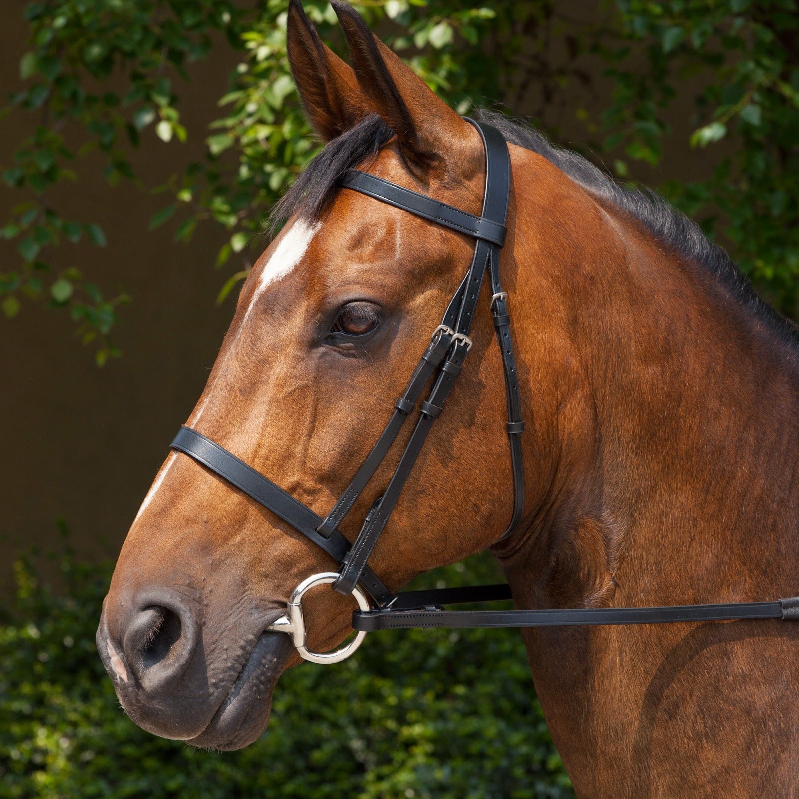 horse life and love all about bridles