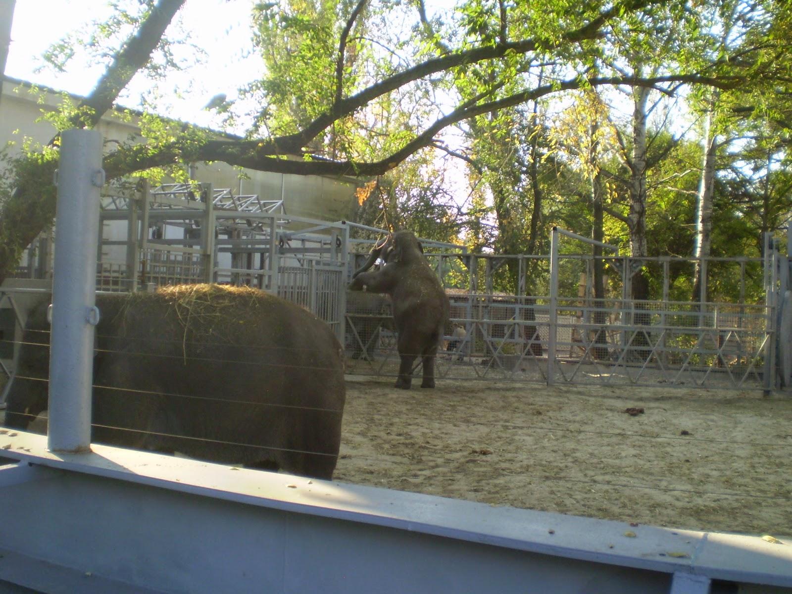Rostov-Zoo-Elephants