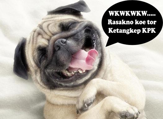 gambar muka anjing tertawa lucu