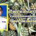 เรือนจำกลางเขาบินราชบุรี ช่วยเหลือเกษตรกรสนับสนุนซื้อสับปะรดเนื่องจากผลผลิตล้นตลาด