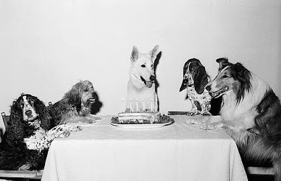 dogs at birthday party