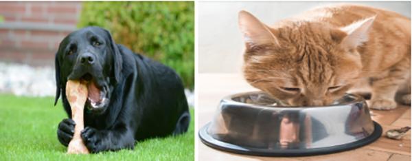 petfoodinstitute-mascotas-gastritis