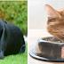 ¿Cómo prevenir la gastritis en las mascotas?