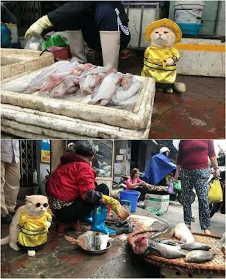 Kucing Lucu Ini Kaprikornus Penjaga Lapak Ikan Sekaligus Mandor di Pasar  Viral! Kucing Lucu Ini Kaprikornus Penjaga Lapak Ikan Sekaligus Mandor di Pasar