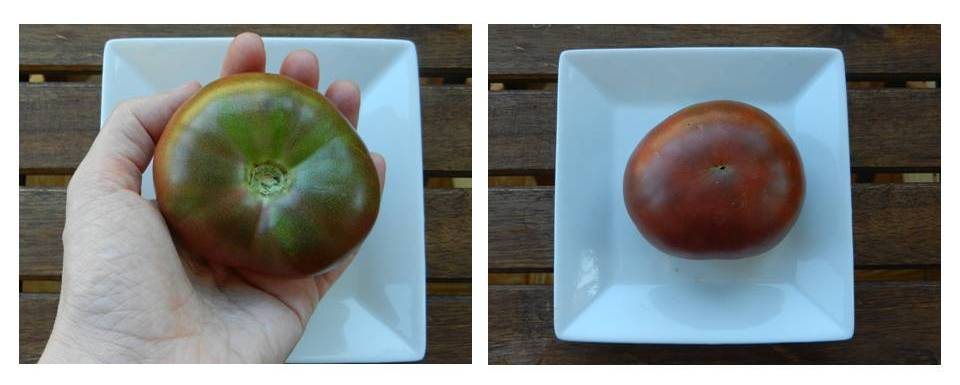 tomate negro de rusia