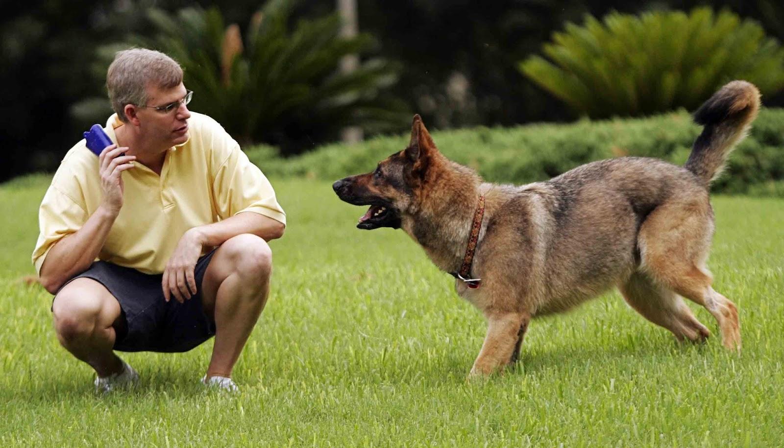 Alman Çoban Köpek yavrularına ne besleyelim