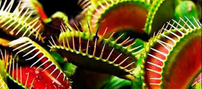 Plantas carnivoras y movimiento