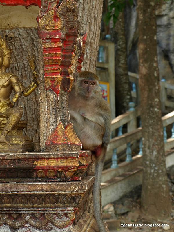 Wat Tham Seua (Światynia Tygrysa)