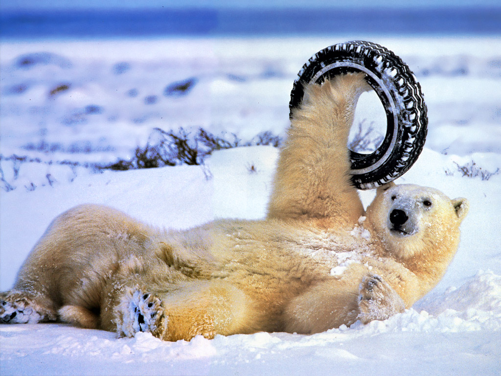All Animals Wallpaper: Funny Animals Hd Wallpapers 2013
