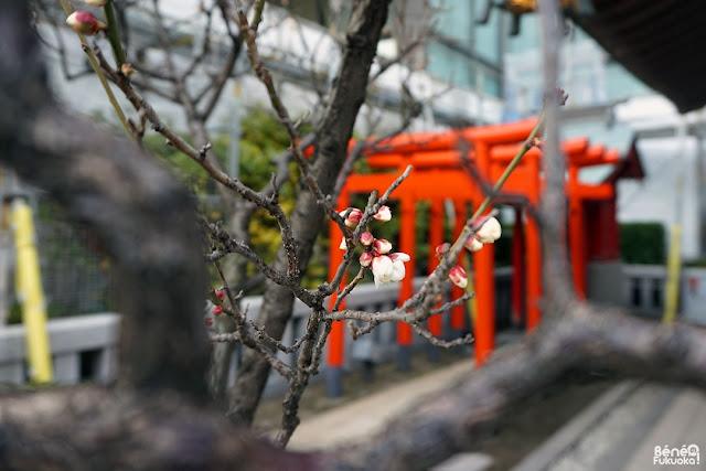 梅の花、鏡天満宮、福岡