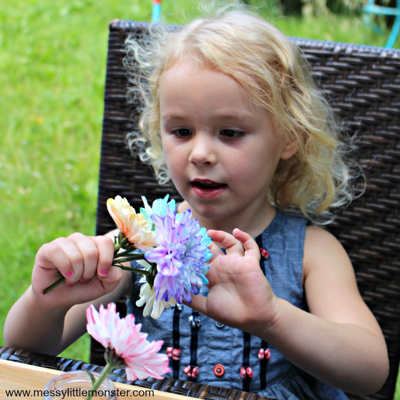 how to make colour changing flowers - rainbow flower science experiemnt for preschoolers