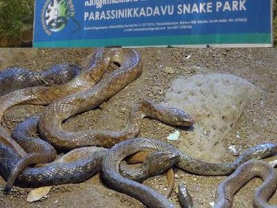 Parassinikkadavu Snake Park Kannur Kerala