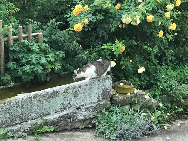 Katze am Brunnen  (c) by Joachim Wenk