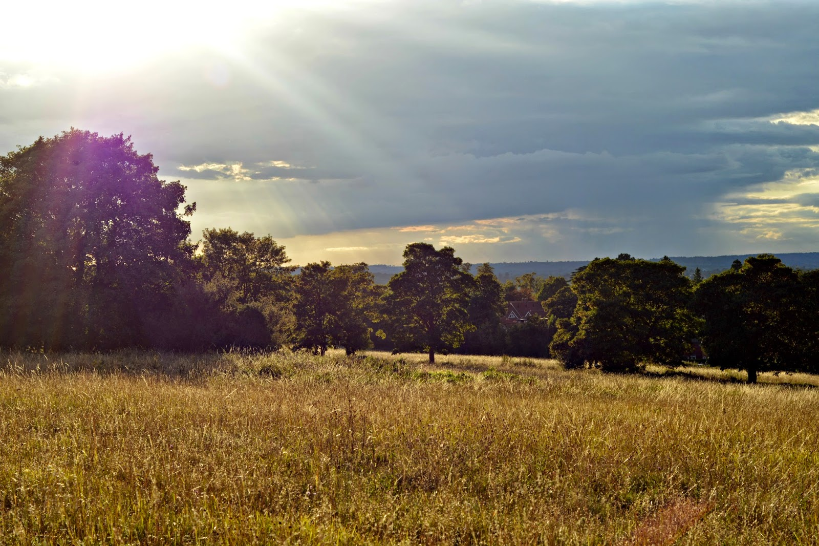 North Downs in Guildford Surrey at Sunset